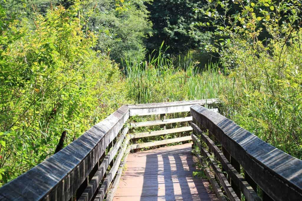 McLane Creek Nature Trail Olympia WA boardwalk